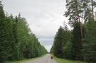 Memelradweg: entlang der 141 durch einen grossen Wald.