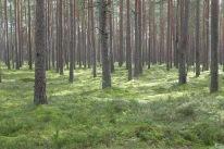 """Die lettischen Wälder: """"Do kennsch näiliege."""""""