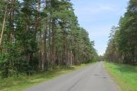 Ruhige Nebenstrasse durch schöne Wälder.