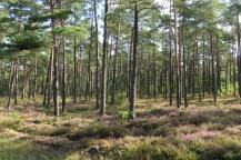 Diese Wälder - da könnt ich näiliege!