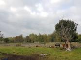 Krokshult: ursprüngliche Landschaft