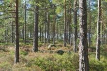 Diese Wälder...