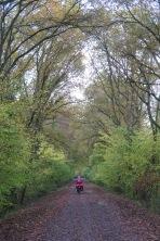 Herbst im Nahetal: oft ist der Radweg komplett blätterbedeckt.